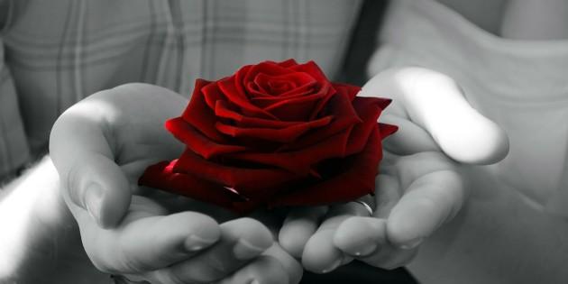 flowers-72235_1280-630x315
